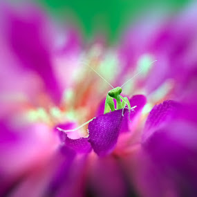 green-point by Nordin Seruyan - Nature Up Close Flowers - 2011-2013