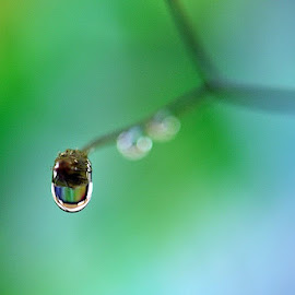 by Paul Wante - Abstract Water Drops & Splashes ( macro, single, waterdrop, blue, green )