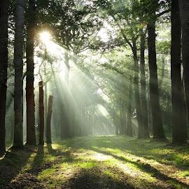 Fairytale  by Gert de Vos - Landscapes Forests