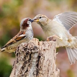 by David Hopper - Novices Only Wildlife