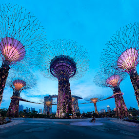 Super Tree in Blue Hour by Riki Boo - Buildings & Architecture Bridges & Suspended Structures ( gbtb, garden by the bay, supertree, mbs, architecture, singapore,  )
