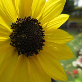 see the pollens by Shubh Pallav - Novices Only Flowers & Plants (  )