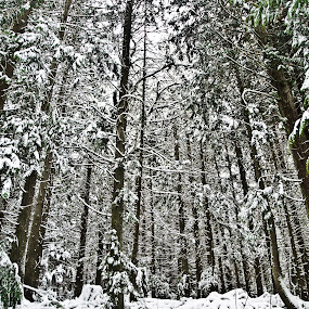 sticks by Eddie Murdock - Landscapes Weather ( pwcwinter )