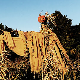 Beware the Pumpkin Man by Kristine Nicholas - Novices Only Objects & Still Life ( farm, holiday, scary, corn maze, autumn, spooky, scarecrow, fall, scare crow, corn, halloween,  )