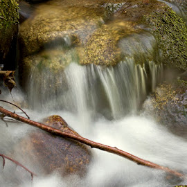 by Siniša Almaši - Nature Up Close Water ( water, up close, stream, wood, nature, view, stones, rocks, light, spring, colours, river )