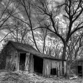 Old Shed by Vicki Overman - Buildings & Architecture Other Exteriors ( shed, barn, black and white, tool shed, hdr image )