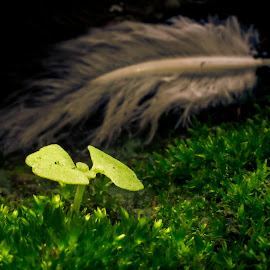 Photosynthesis  by Samrat Sam - Nature Up Close Leaves & Grasses