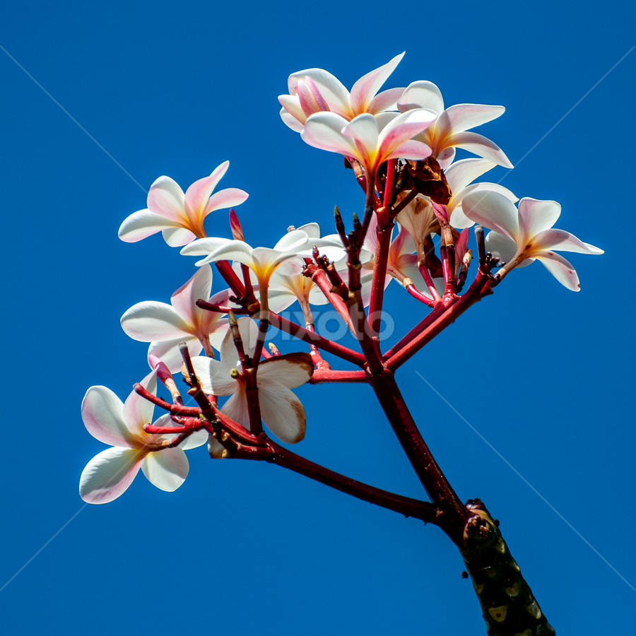 by Keith Sutherland - Flowers Tree Blossoms
