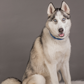 by Myra Brizendine Wilson - Animals - Dogs Portraits ( canine, foster dog, dogs, pet, pets, gcspca, dog, foster aspen, aspen,  )