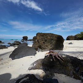 crab in paradise by Frank Photography - Animals Amphibians ( water, holiday, lagoon, pacific, beach, angle, crab, island )