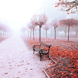 my park by Sanja Dedić - City,  Street & Park  City Parks ( park benches, park, parks, park bench )