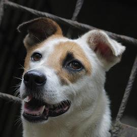 What's that! by Vivek Chethan Muliya - Animals - Dogs Portraits ( animals, dogs, portraits )