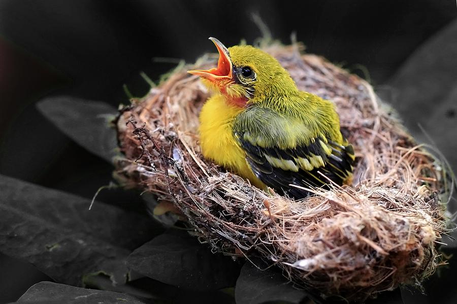 by Benny Sugiarto Eko Wardojo - Animals Birds