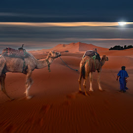 by Moussa Idrissi - Animals Other Mammals