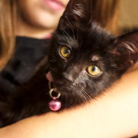 by Kayla Hamilton - Animals - Cats Kittens (  )