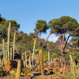 Cactus  and suculent plants garden by Opreanu Roberto Sorin - Nature Up Close Trees & Bushes ( plant, conception, ornate, architecture, travel, botanical, spain, mirror, tranquil, sky, tree, nature, andalusia, idyllic, botanic garden, andalucia, mirador, pine, building, spanish, peaceful, park, flora, green, beautiful, tourism, traditional, lake, relaxation, sign, panoramic view, palm tree, tourist, european, malaga, blue, outdoor, tranquility, view, histórico, garden, natural, jardín botánico, cactus )