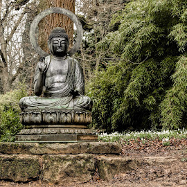 Buddha and Snowdrops by Jackie Matthews - City,  Street & Park  Vistas ( winter, buddah, snowdrops, trees, arboretum, Buddhism )