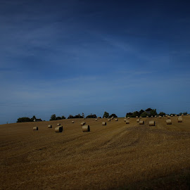 by Rita Cadima - Landscapes Prairies, Meadows & Fields