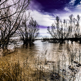 Flood 3 by Greg Bennett - Landscapes Waterscapes