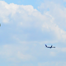 The Seagul & The Plane by Joatan Berbel - Animals Other ( abstract, seagull, plane, colorful, vista )