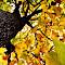 AutumnDream.jpg