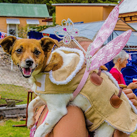 Tinkerbelle by Simon Shee - Animals - Dogs Portraits ( australia day, australia, foster, toora, gippsland, lions club, victoria, dog,  )