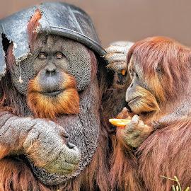 That's My Man! by Dennis Bartsch - Animals Other Mammals