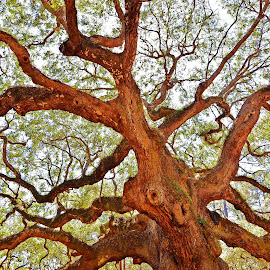 Ancient Oak by Steve Wilking - Nature Up Close Trees & Bushes