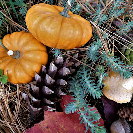 by Denise O'Hern - Public Holidays Thanksgiving