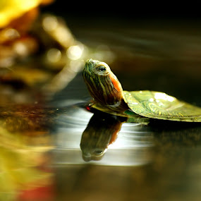 Still Alone by Roem Hasadi - Animals Amphibians ( animals, macro )