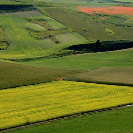 Castelluccio 12 by Bruno Brunetti - Landscapes Prairies, Meadows & Fields ( colors, flowers, italy, castelluccio, fields,  )