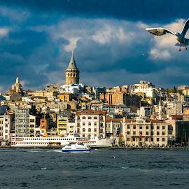 by Abhay Desai - City,  Street & Park  Skylines ( galata tower, istanbul, turkey, waterfront, skyline, birds )