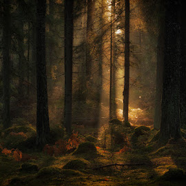 Forest. by Allan Wallberg - Nature Up Close Trees & Bushes ( wood, forest, light )