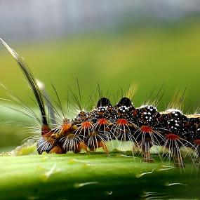 Caterpillar  by Adnan Hidayat Prihastomo - Instagram & Mobile Other ( macro, caterpillar, insect )