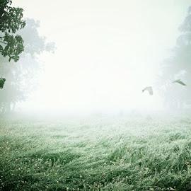 frosty morning by Ranabir Halder - Nature Up Close Gardens & Produce