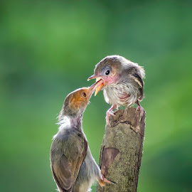 Feeding  by Dikky Oesin - Animals Birds