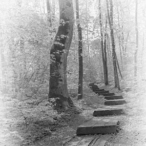 My Path by HB Jansson - Landscapes Forests ( b/w, sweden, lund, path, forest )