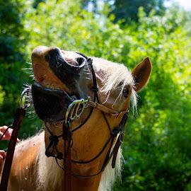 Smile by Chelesphotography Weaver - Animals Horses