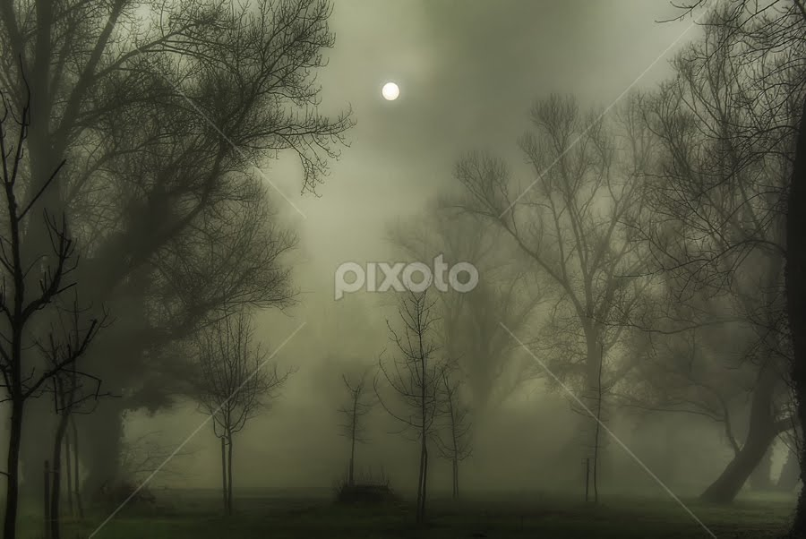 Foggy Morning by Boris Frković - Landscapes Weather ( dawn, fog, sunrise, morning, mist )