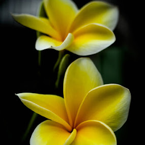 Flower #2 by Dimas N - Nature Up Close Flowers - 2011-2013