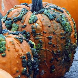 Pumpkins by Donna Davis Kasubeck - Public Holidays Halloween (  )