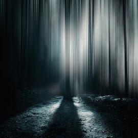 Nice Forest Walk by Franz Engels - Digital Art Places ( fineart, nature, fine art, landscape photography, sunstar, forest, landscape, landschaftsfotografie, sun star )
