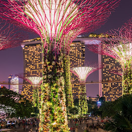 A New Kind of Garden by Gary Stanley - City,  Street & Park  City Parks ( avatar of singapore, gardens by the bay, marina bay, nightscapes, singapore )