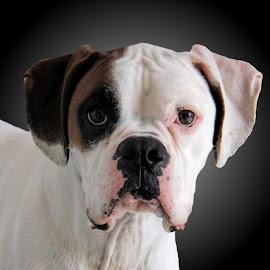 by Photo9981  XXX - Animals - Dogs Portraits