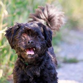 by Kishu Keshu - Animals - Dogs Portraits