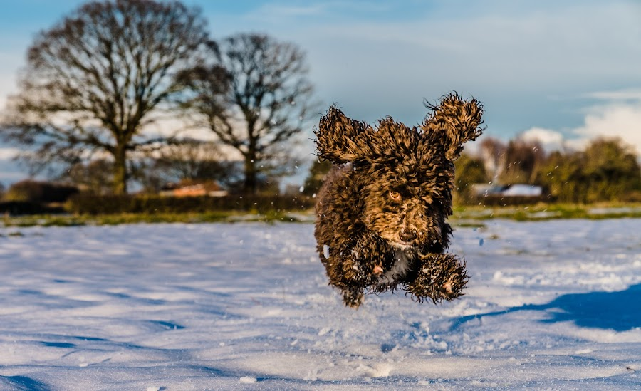 Action Dog by Nigel Bishton - Animals - Dogs Running