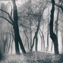 by Marchevca Bogdan - City,  Street & Park  City Parks