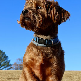 Standing Proud by Mike Craig - Animals - Dogs Portraits