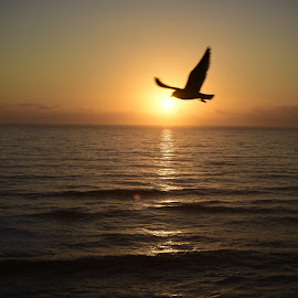 Sunrise by John Wayne Robert Jansen - Landscapes Sunsets & Sunrises ( water, bird, waterscape, wildlife, ocean, sunrise )