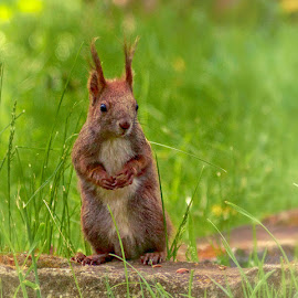 Hello, do you have something for me? by Radu Eftimie - Animals Other Mammals ( squirell )